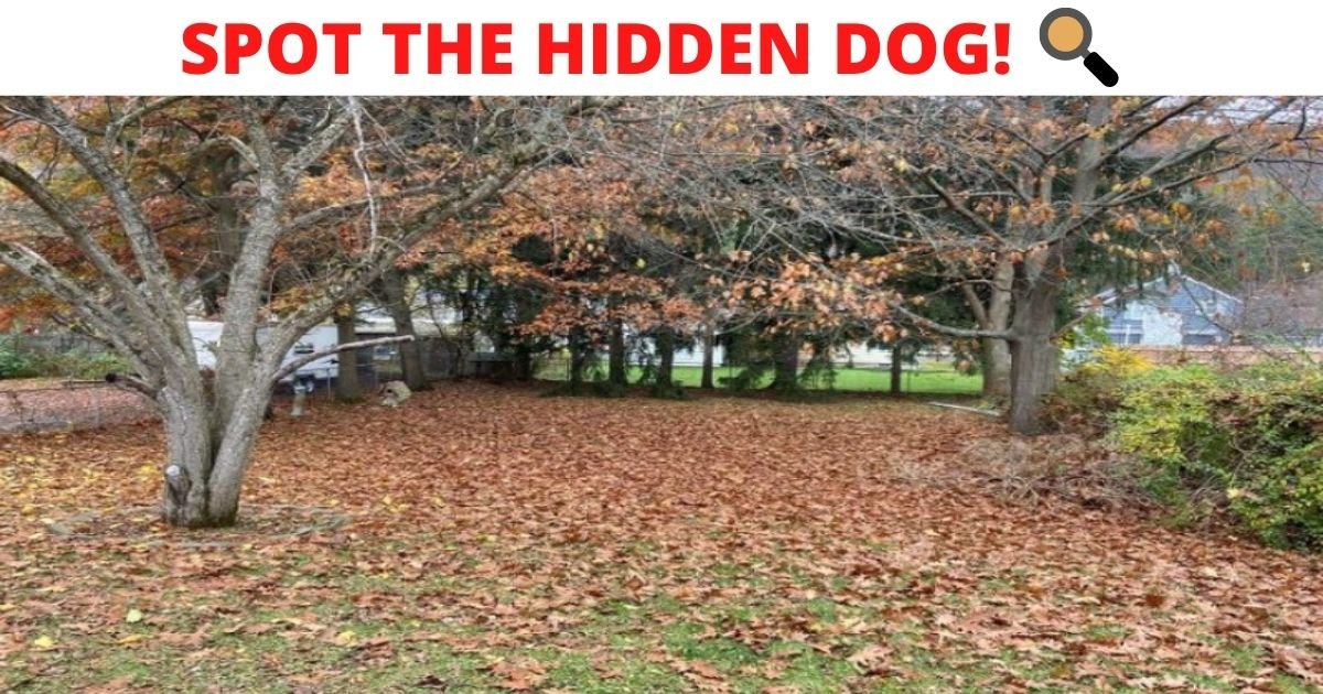 spot the hidden dog.jpg?resize=412,232 - How Fast Can You Spot The Hidden Dog In This Photo? 95% Of People Can't See It!