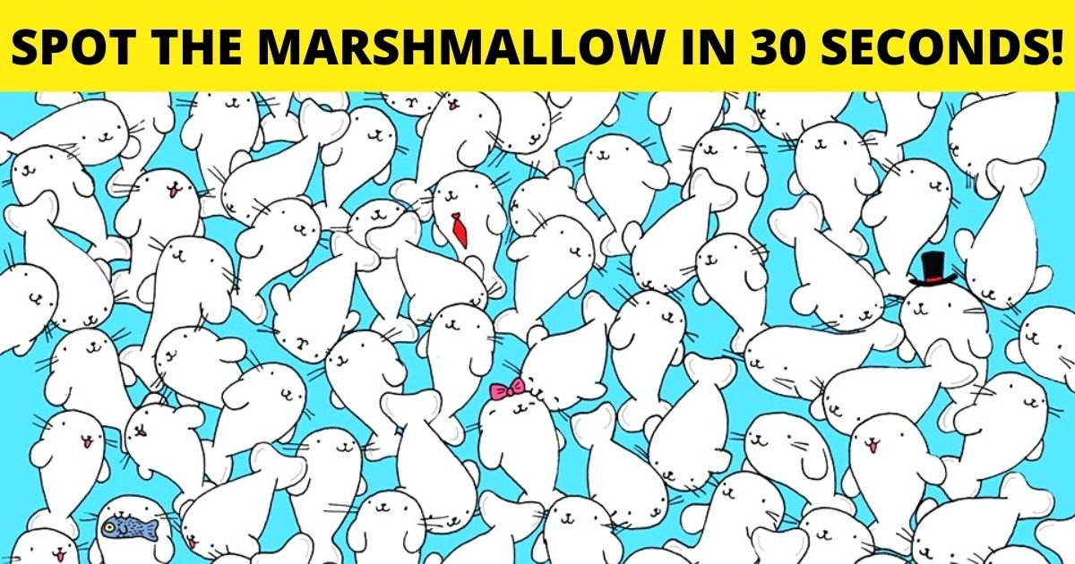 spot the marshmallow.jpg?resize=1200,630 - How Fast Can You Spot The Marshmallow Hiding Among The Seals?