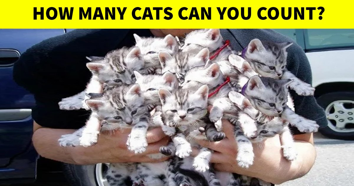 t2 38.jpg?resize=412,232 - How Fast Can You Count The Number Of Kittens In This Picture?