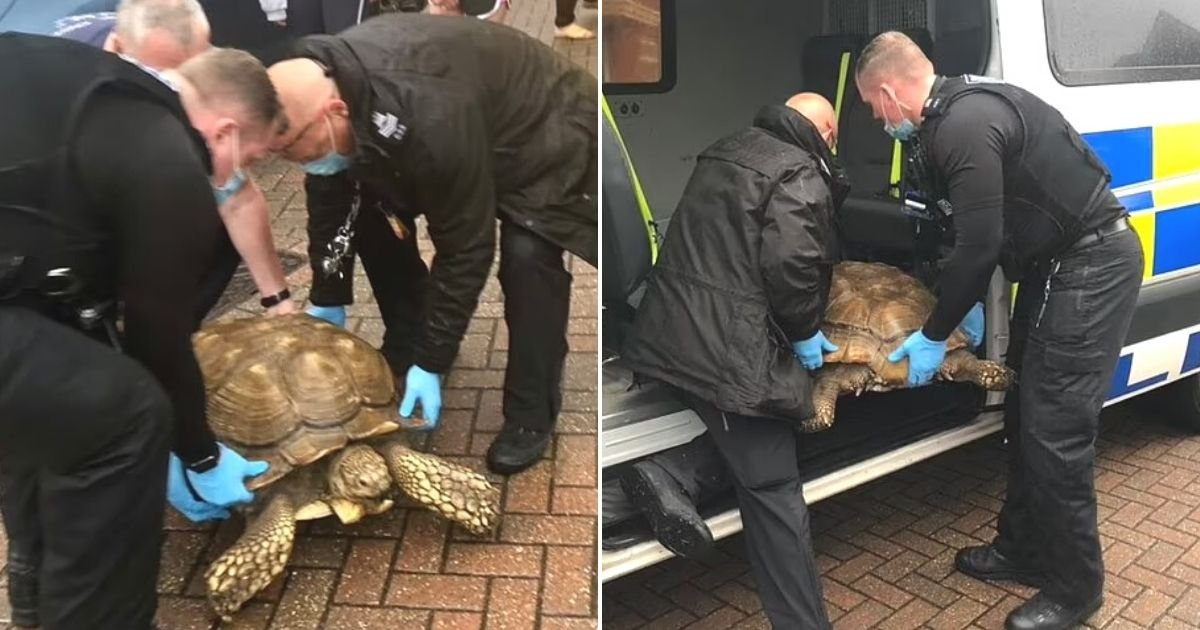 untitled design 8.jpg?resize=1200,630 - Police Go On Low-Speed Chase After Giant Tortoise Escapes From Its Enclosure