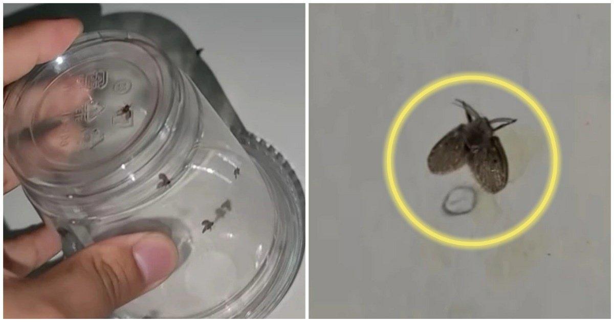 """1 43.jpg?resize=1200,630 - """"화장실 벽에서 자주 보이는 이 벌레를 절대 맨손으로 잡으면 안 되는 '이유'"""