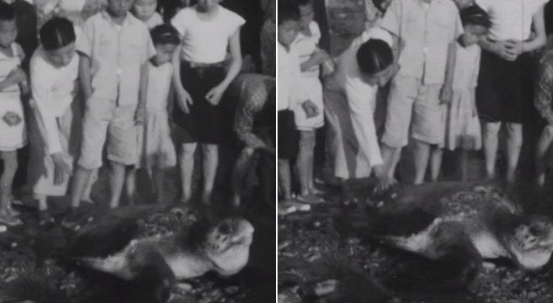 알 낳으러 해운대 찾아왔다가 부산 시민들에게 '풀코스'로 대접받고 간 200살 거북