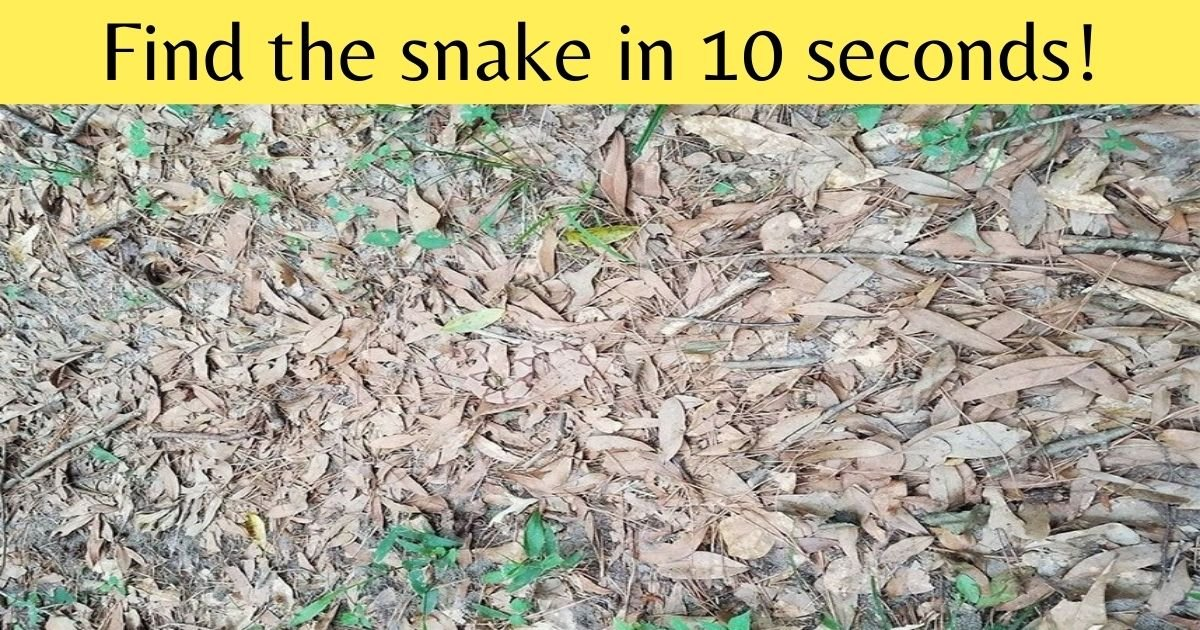 add a heading 2.jpg?resize=1200,630 - Can You Find The Snake In This Picture Before It Bites? Only The Most Sharp-Eyed Viewers Can See The Animal!