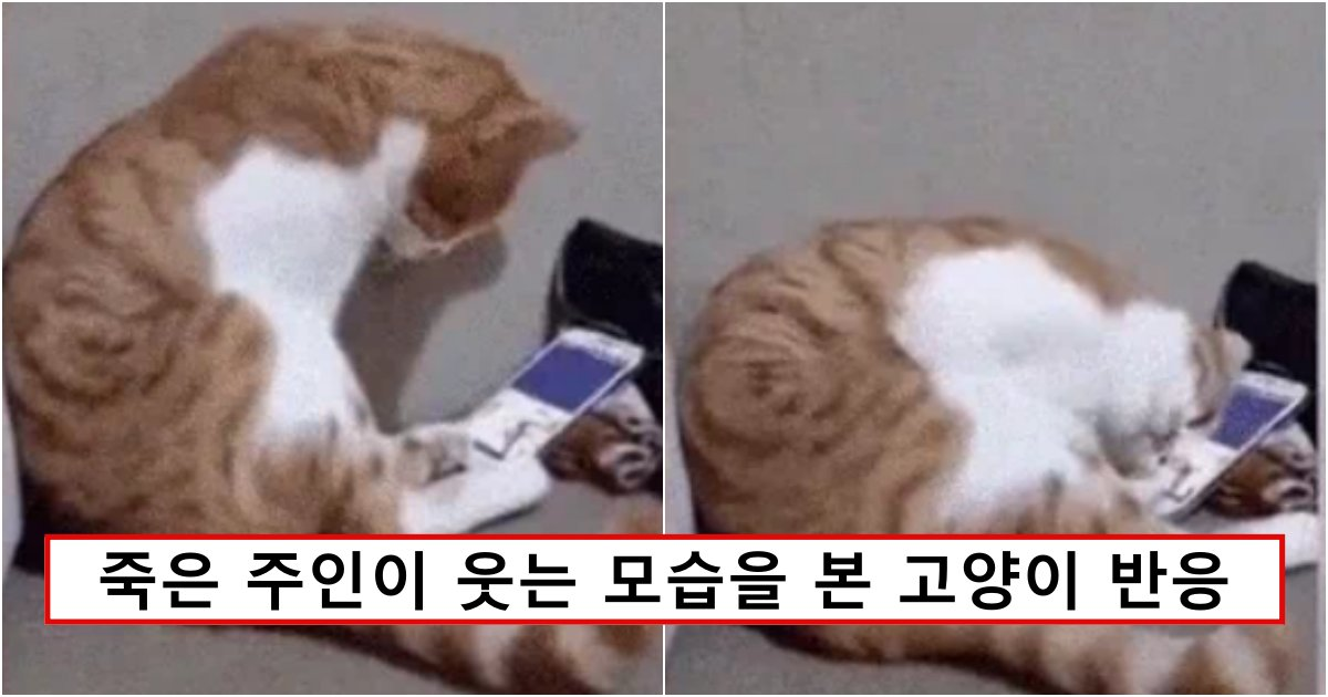 collage 487.png?resize=1200,630 - 평생을 함께 살던 주인이 죽고 홀로 남은 고양이가 생전 얼굴과 목소리를 보자 보인 반응 (영상)