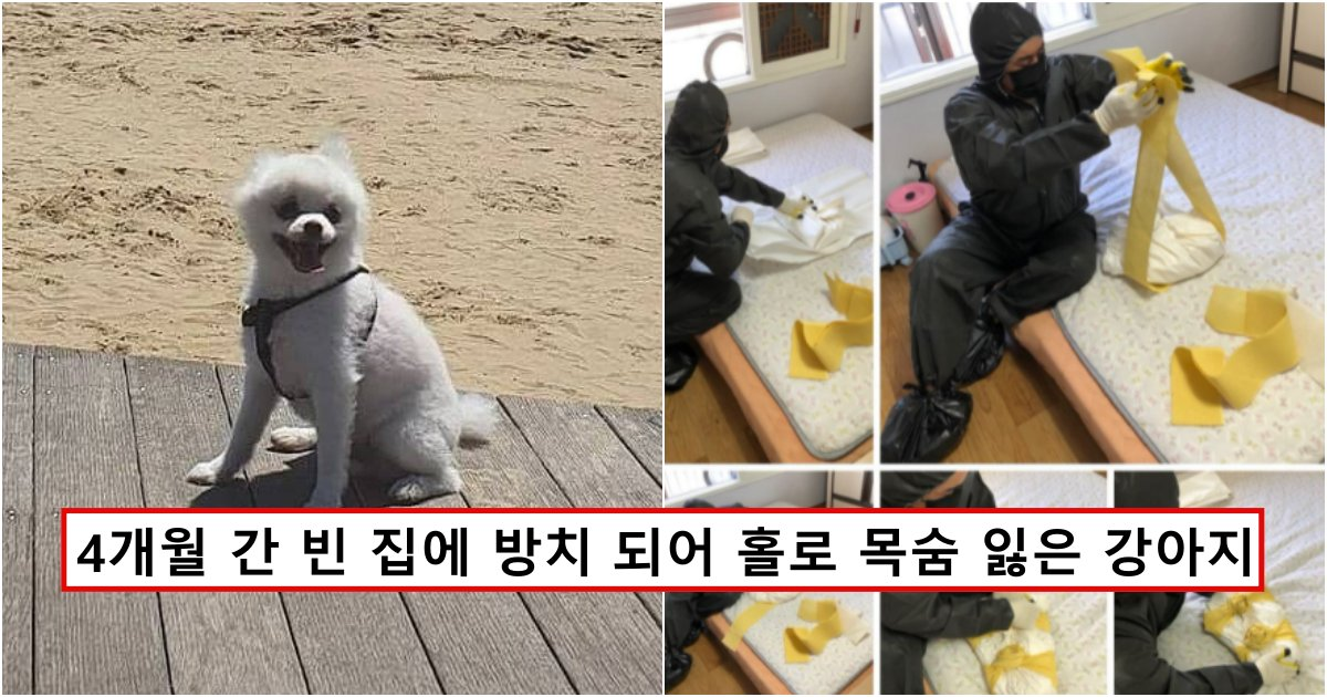 collage 709.png?resize=1200,630 - 4개월 동안 아무도 없는 빈 집에 버려진 강아지가 목숨을 잃어가던 과정 (사진주의)