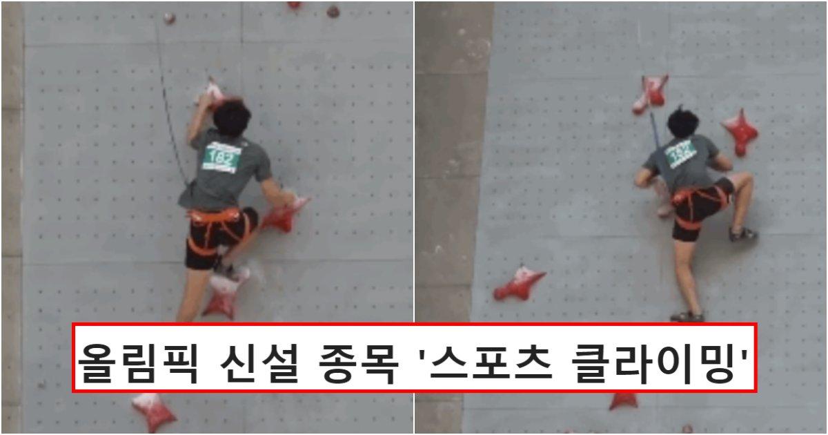 collage 739.png?resize=412,232 - 이번 올림픽에 새로 만들어져 반응 난리 난 스포츠 클라이밍 선수들 속도 클라스 (영상)