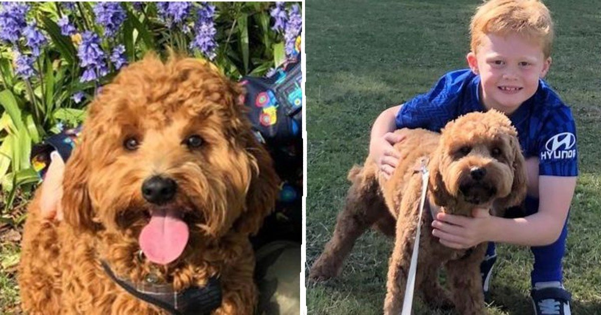 """dogs stolen thumbnail.jpg?resize=412,275 - """"I Will Cry Forever"""" Says Young Boy After Two Puppies Are Stolen From Family"""