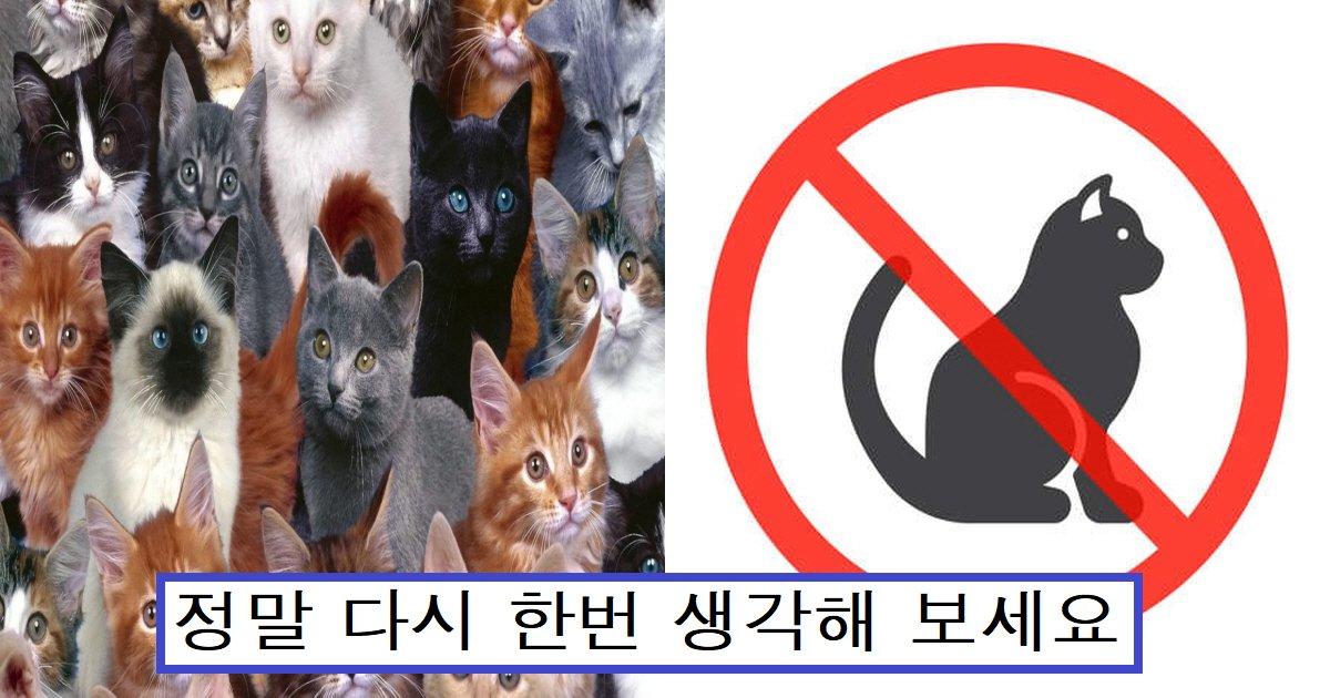 "eab3a0ec9691ec9db4ec8db8.png?resize=1200,630 - ""왜 키우면 안 돼요?""...수의사가 애완묘로 추천하지 않는 고양이 종"