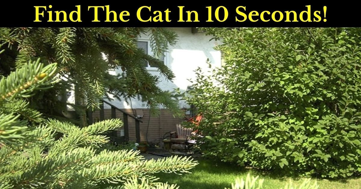 find the cat in 10 seconds 1 2.jpg?resize=1200,630 - There's A Cat Hiding In Plain Sight - But Can You See It?