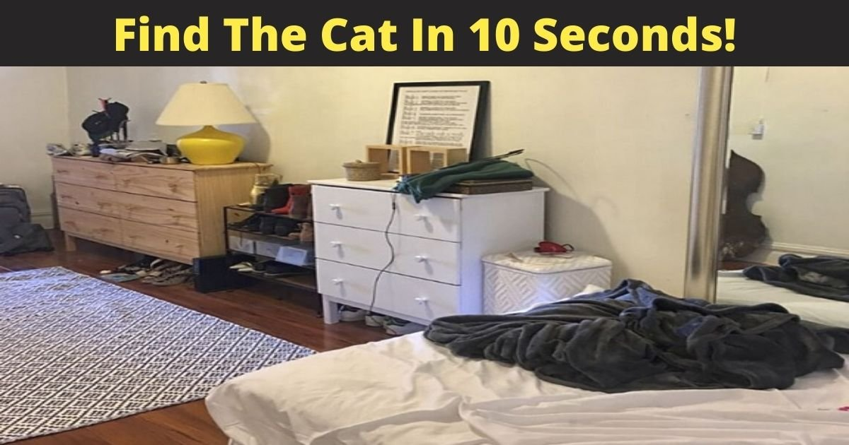 find the cat in 10 seconds 1.jpg?resize=412,232 - Only 3% Of People Could Find The Hidden Cat In This Picture! Do You See It?