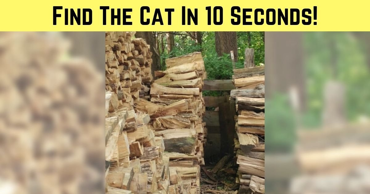 find the cat in 10 seconds 3.jpg?resize=1200,630 - There Is A Cat Hiding In This Photo! Can You Find It In 10 Seconds?