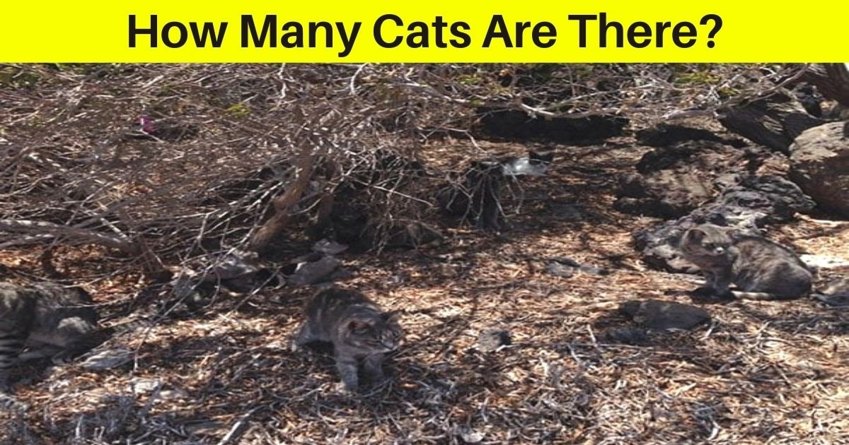 how many cats are there.jpg?resize=1200,630 - How Many Cats Do You See In This Photo? 95% Of People Couldn't Find Them All!
