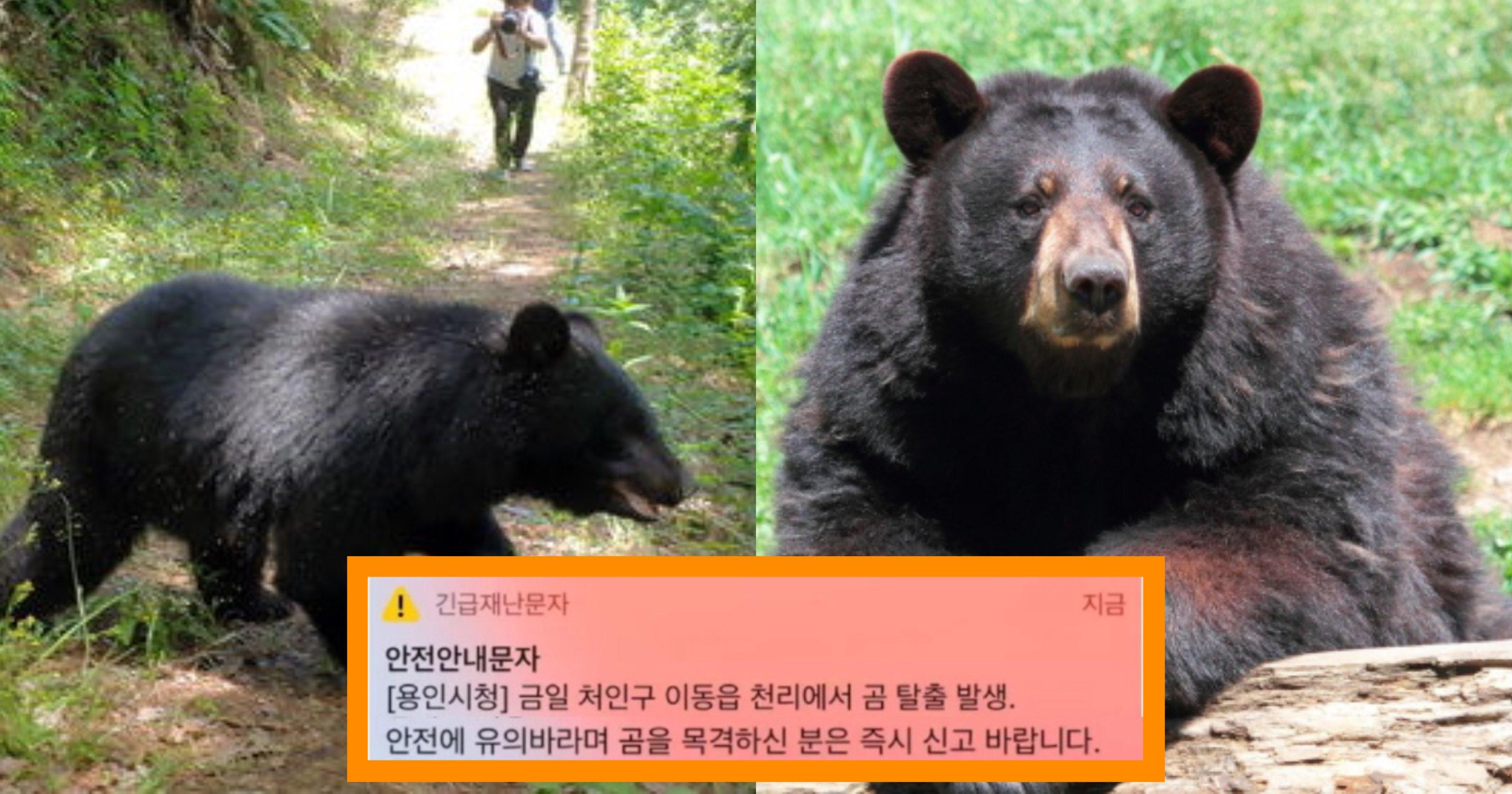"kakaotalk 20210706 125404367.jpg?resize=1200,630 - ""곰이 탈출 했습니다 조심하세요""...경기도 '용인'에서 곰 탈출해 긴급재난문자"