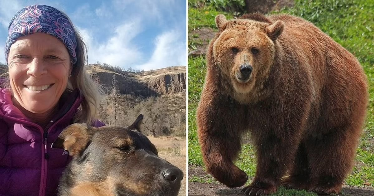 lokan5.jpg?resize=412,232 - 65-Year-Old Woman Is Dragged By A 400-Pound Grizzly Bear While She Was Sleeping
