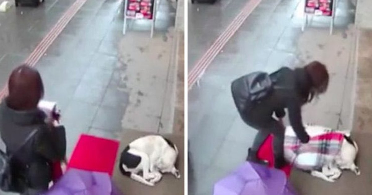 q2 39.jpg?resize=1200,630 - Heart-melting Moment As Woman Sees Frozen Stray Dog & Covers Him Up With Her Scarf