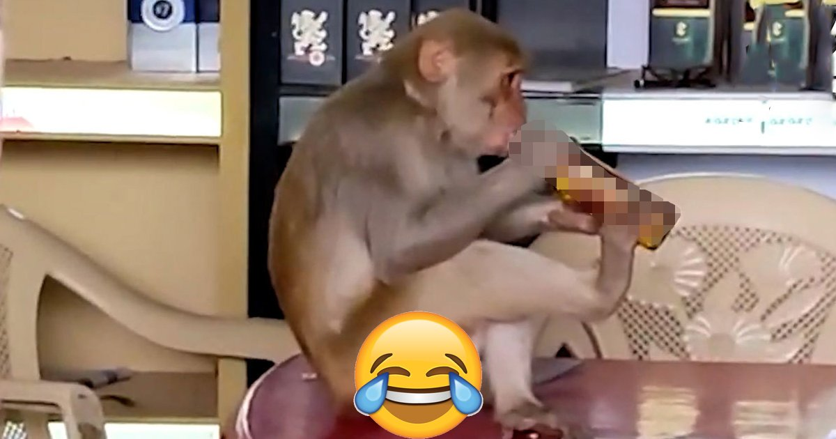 q3 43.jpg?resize=1200,630 - Planet Of The Grapes | Monkey Gets DRUNK After Swiping Wine From Liquor Store