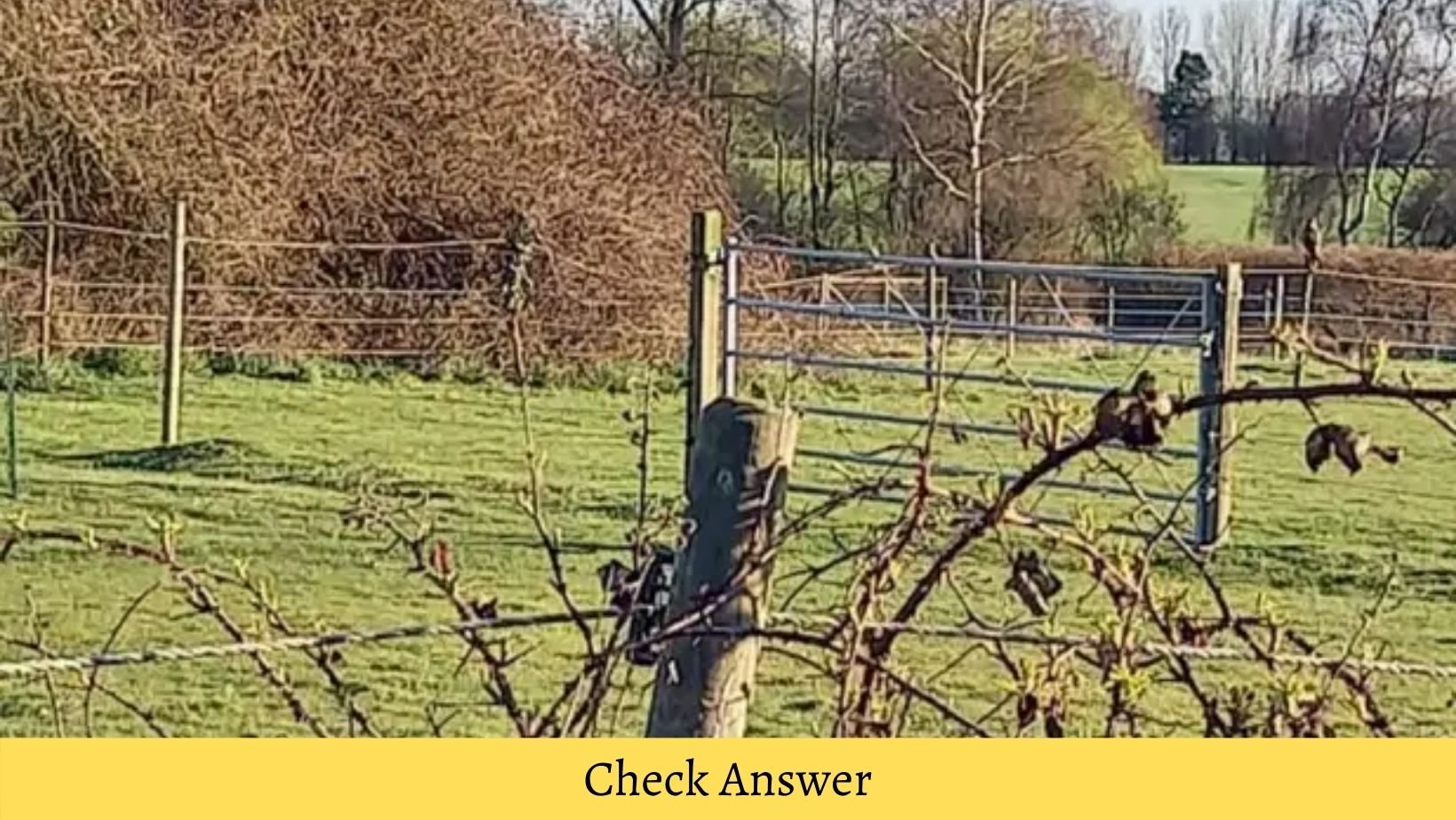 small joys thumbnail 12.jpg?resize=1200,630 - A Bird Is Camouflaged In This Photograph, Can You Spot It?
