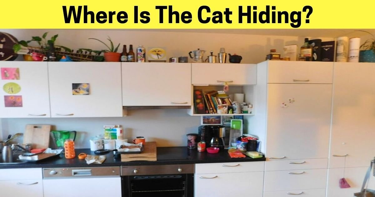 where is the cat hiding.jpg?resize=1200,630 - Only 1% Of People Could Spot The Hidden Cat In This Picture! Can You See It?