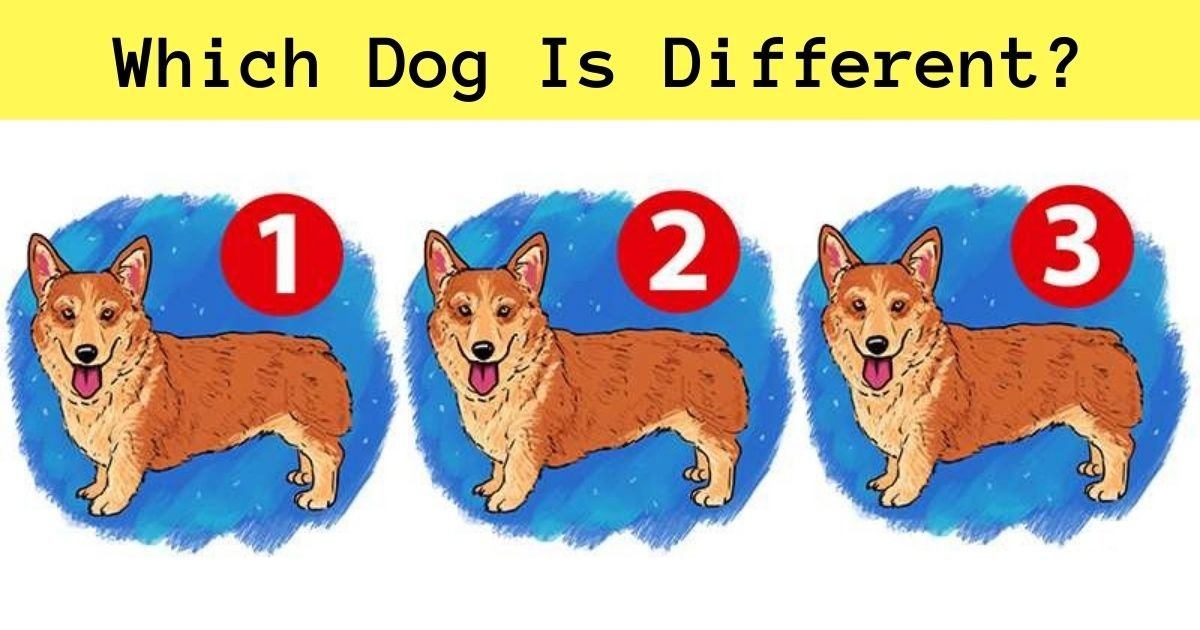 which dog is different.jpg?resize=1200,630 - 90% Of People Couldn't Spot The Difference Here! Can You Find It?