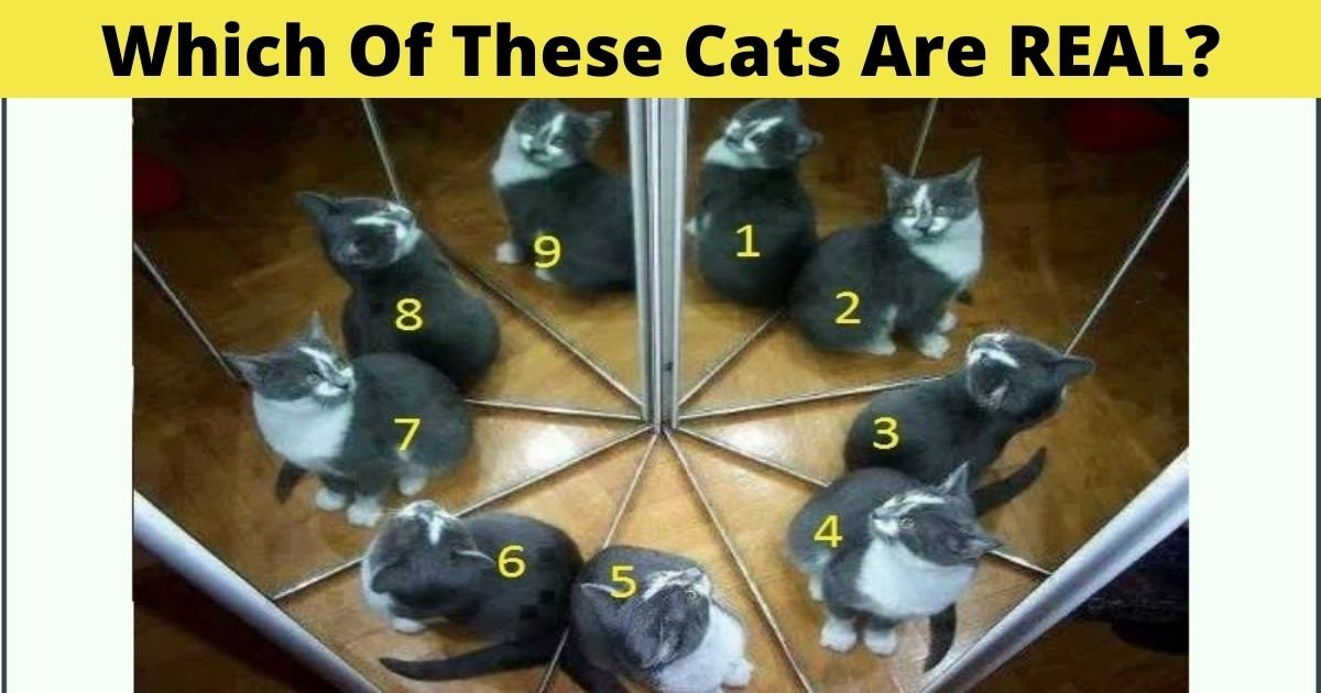 which of these cats are real.jpg?resize=412,232 - Which Of These Cats Are Real? Take A Closer Look To Spot The Fake Ones!