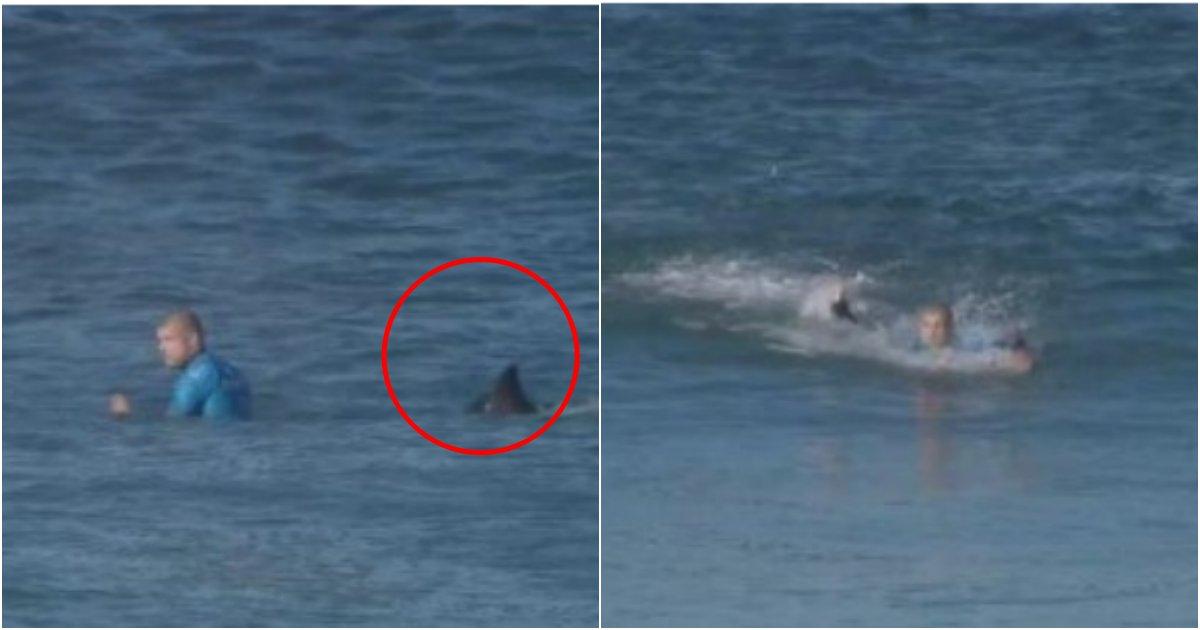 collage 34.png?resize=412,232 - 세계 '서핑대회' 결승 경기 도중 상어가 뒤에 있던 것을 몰랐던 선수의 최후 (영상)