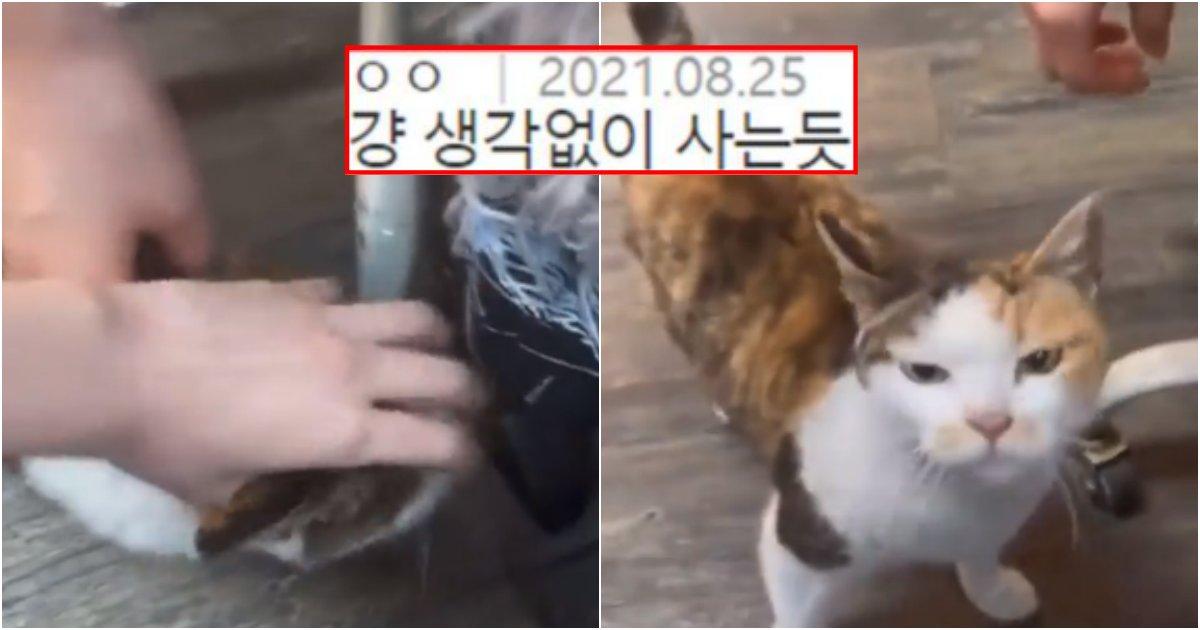 collage 751.png?resize=1200,630 - 고양이 괴롭히는 영상을 당당히 올렸다며 욕 먹고 있는 에스파 윈터 영상
