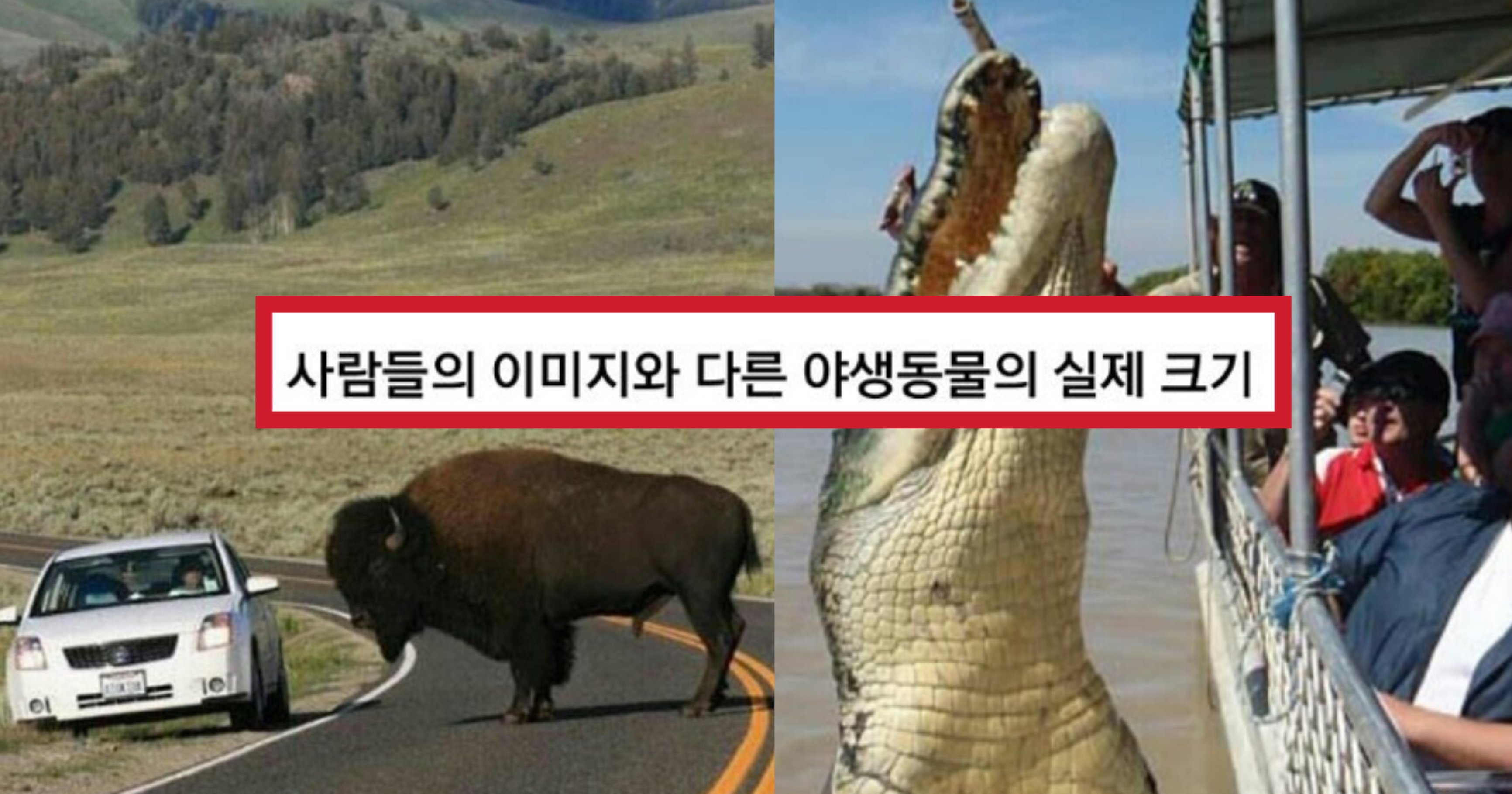 img ce49917faa47 1.jpeg?resize=1200,630 - 사람들이 생각하는 이미지랑 '갭차이' 오지는 야생동물들 실제 크기 수준(+사진)