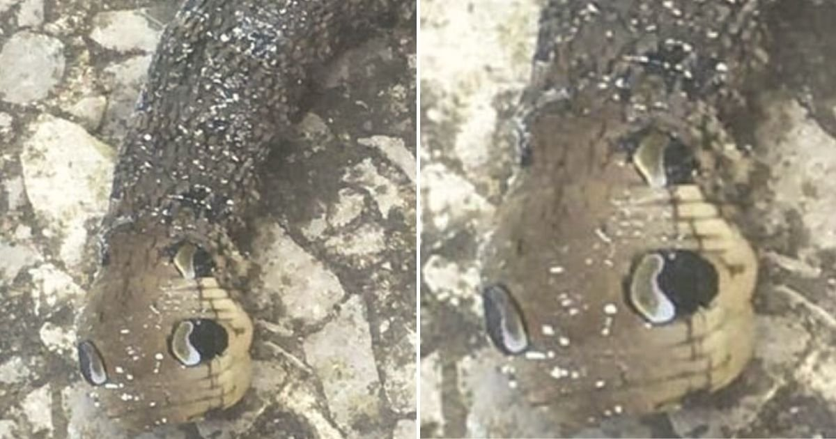 moth5.jpg?resize=412,232 - Woman Was Told To 'Call An Exorcist' After She Found A Weird Creature In Her Home