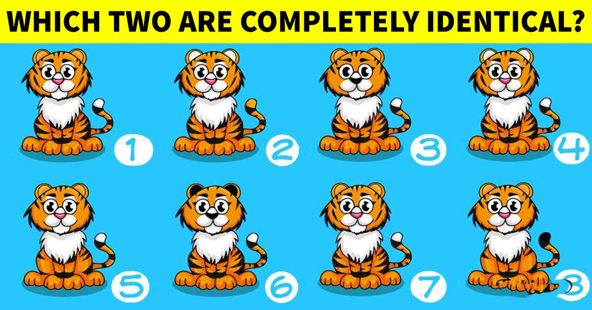 q6 24.jpg?resize=412,232 - How Fast Can You Spot The Two Identical Images?
