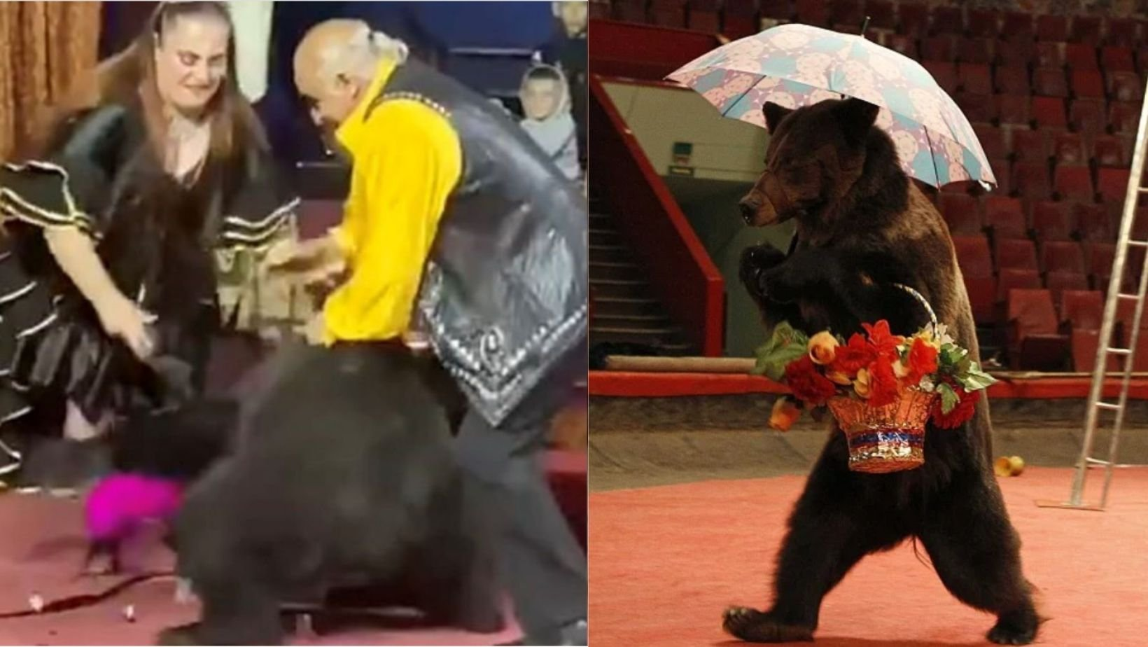 small joys thumbnail 1 2.jpg?resize=412,232 - Terrifying Moment When Performing Bear Went Wild In Circus & Viciously Attacks Trainer