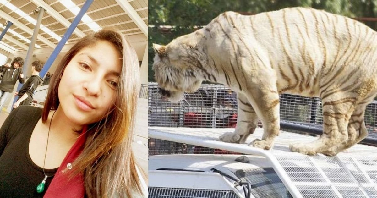 smalljoys 9.jpg?resize=1200,630 - Woman Is Mauled To Death By A Ferocious Tiger After Zookeepers Failed To Warn Her That The Cage Door Was Open