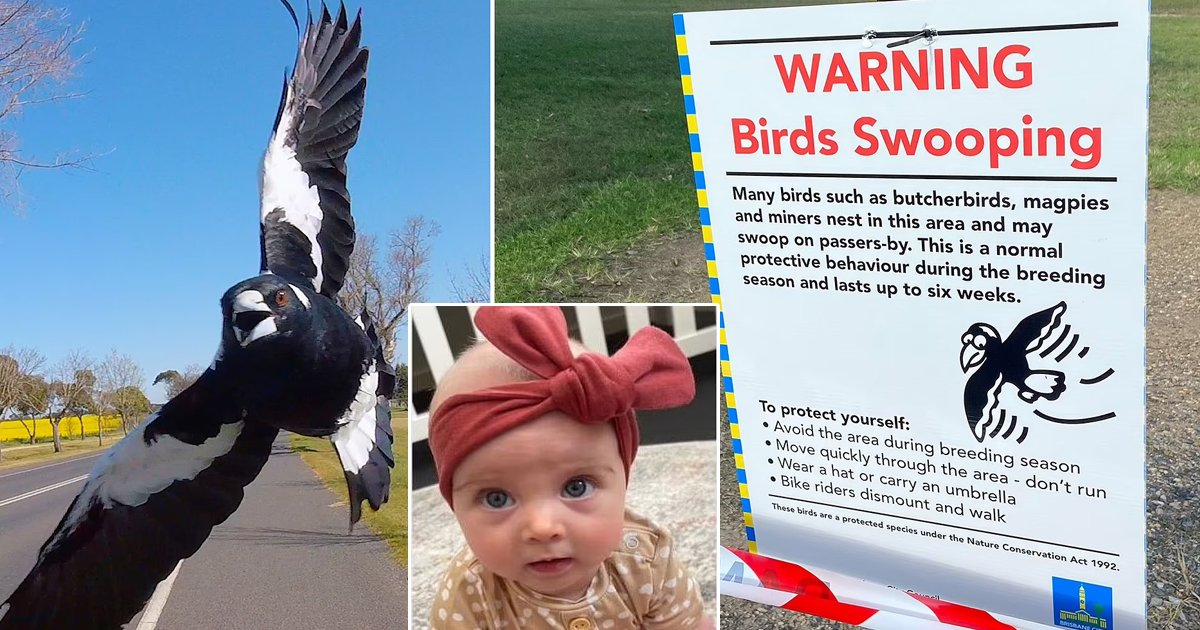 t3 82.jpg?resize=1200,630 - Infant Tragically DIES As Giant Bird Causes Mum To Trip Over While Cradling Baby In Arms