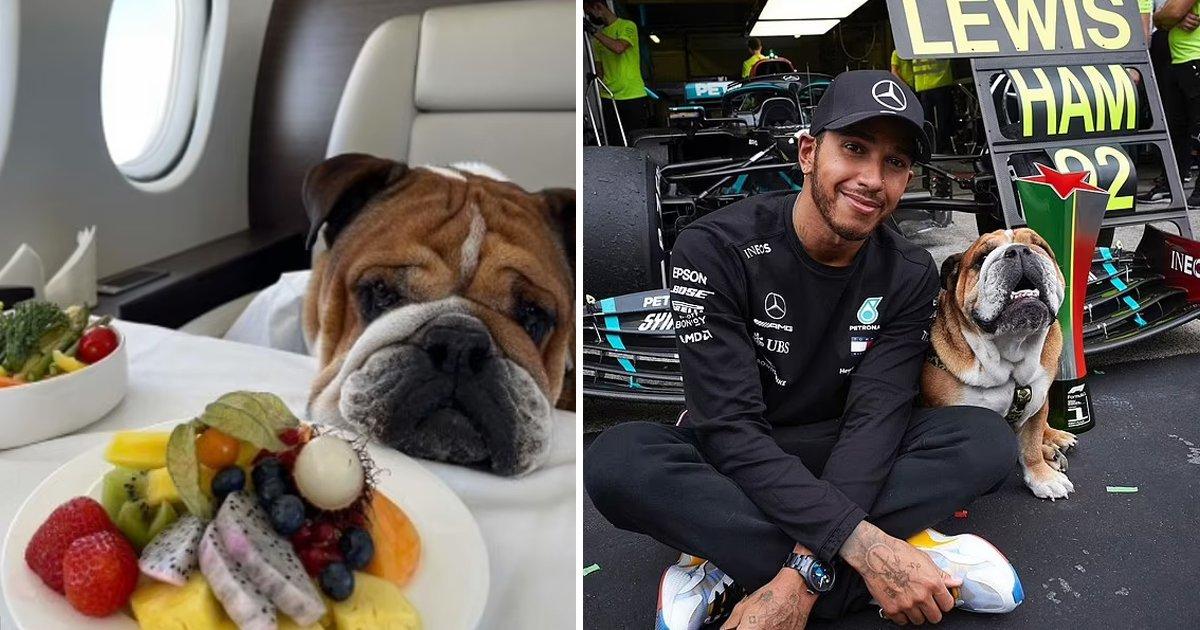 t3 84.jpg?resize=1200,630 - F1 Champion Lewis Hamilton BLASTED for Boasting Dog's Planet Saving 'Vegan Diet'