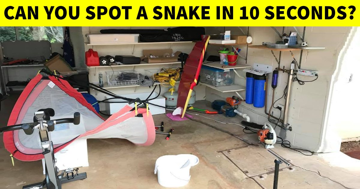 t4 90 2.jpg?resize=412,232 - How Quickly Can You Spot The Snake In This Mind-Teasing Challenge?