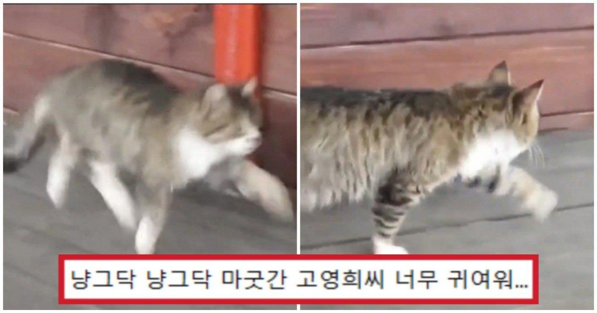 """1 82.jpg?resize=412,232 - """"냥그닥 냥그닥 걷는다""""... 말과 함께 자란 고양이가 걸을 때 삐그덕 거리는 영상 (+소도 추가)"""