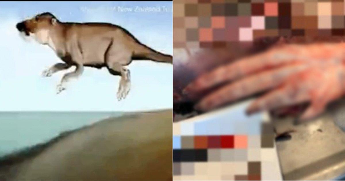 """1e50c49e eff6 48d2 8adc b19761e5323c.jpeg?resize=412,232 - """"고래에 사람같은 손가락이 있다고?""""…고래가 육지동물에서 진화한 거라고 함"""