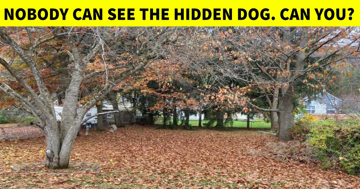 4 53.jpg?resize=412,275 - Wake Up Your Mind In Less Than 10 Seconds | Can You Spot The Hidden Dog?