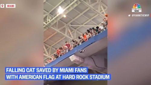Watch-Miami-Fans-Using-American-Flag-To-Catch-Falling-Cat-at-Hard-Rock-Stadium-0-4-screenshot