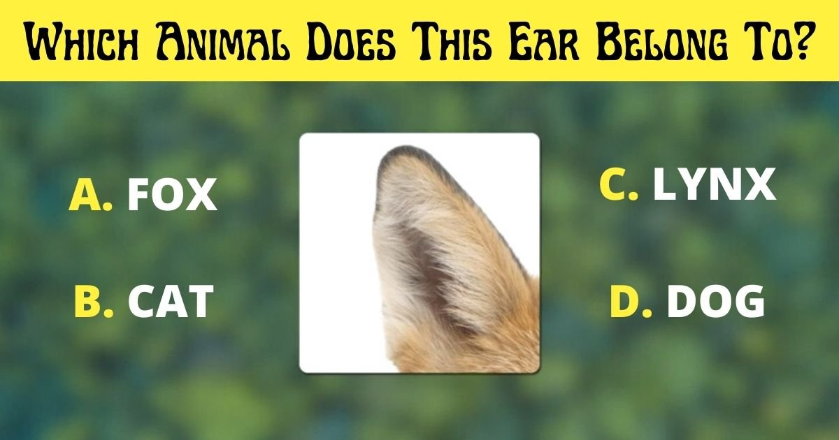 a fox.jpg?resize=412,275 - Vision Test: Can You Figure Out Which Animal Does This Ear Belong To?