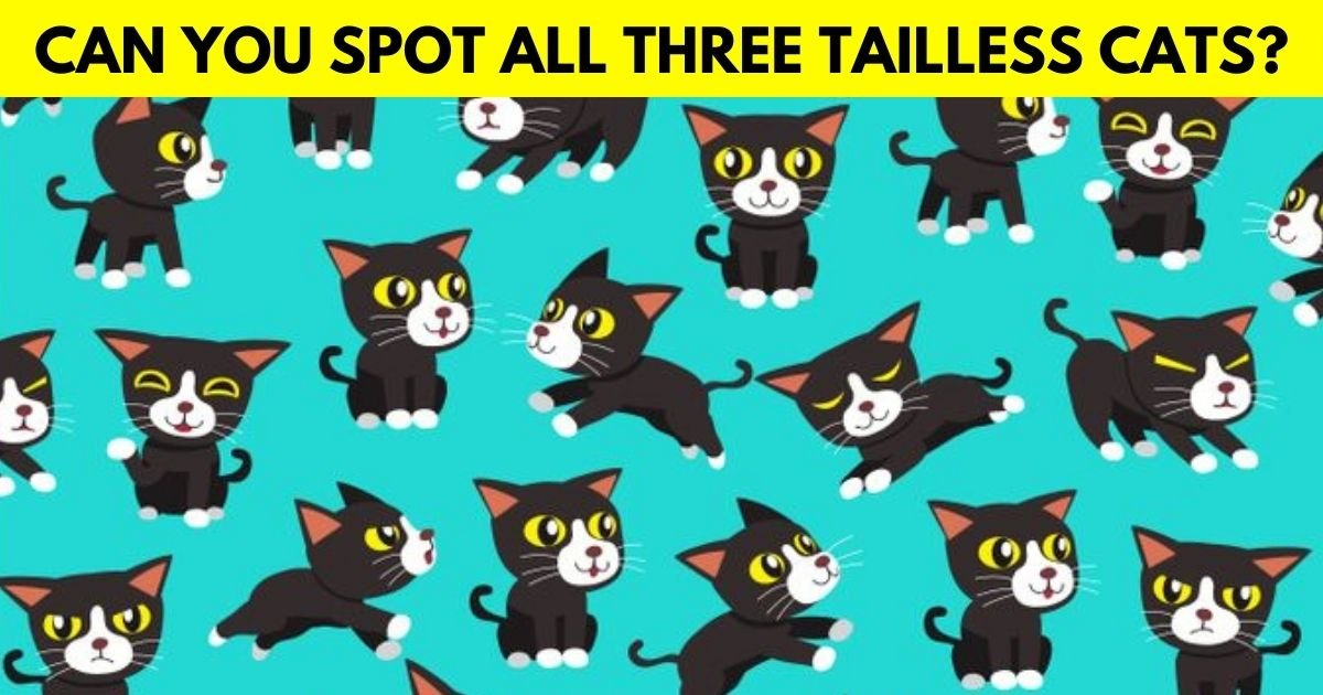 cats4.jpg?resize=1200,630 - How Fast Can You Spot The Tailless Cats In This Fun Picture Puzzle?