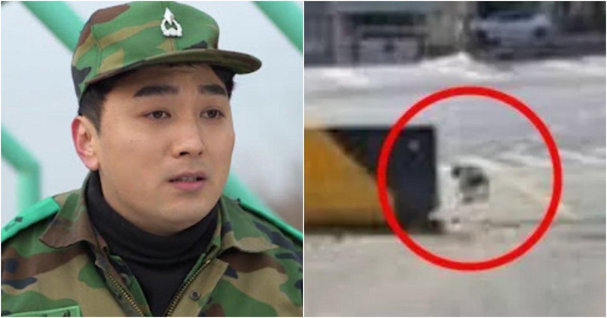 "collage 483.png?resize=574,582 - ""부대에 자꾸 출몰하는 똥깨 2마리를 내쫓았는데 알고보니 이런 강아지였습니다… 어떡하죠…?"""