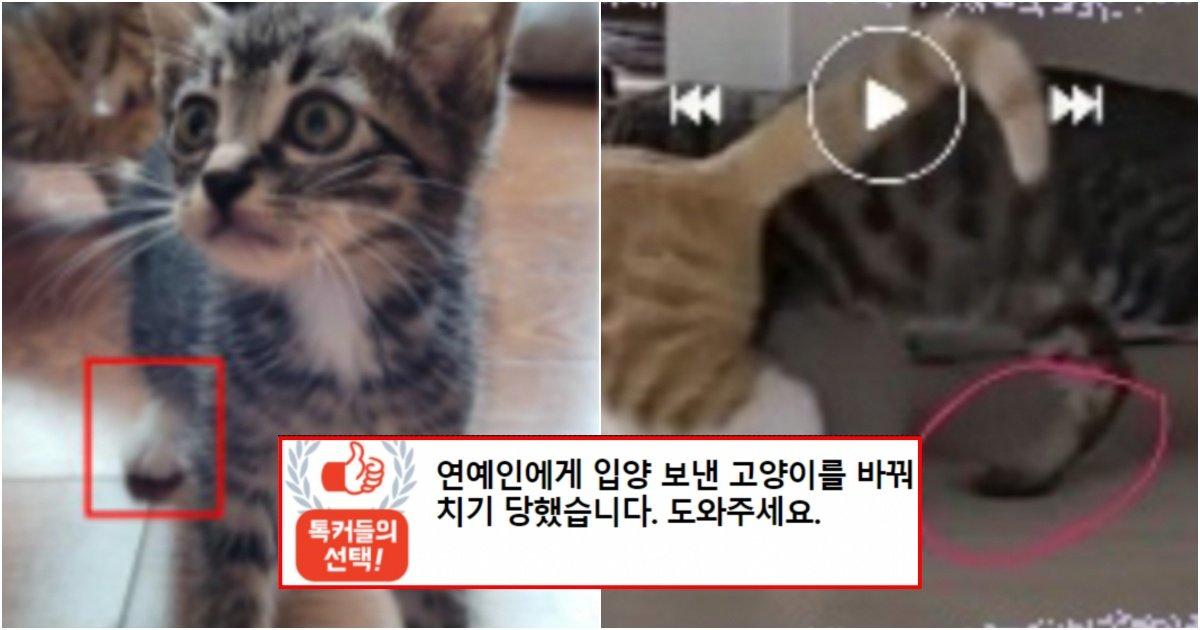 collage 6.jpg?resize=1200,630 - 연예인에게 입양 보낸 고양이를 바꿔치기 당했어요.. 제발 도와주세요