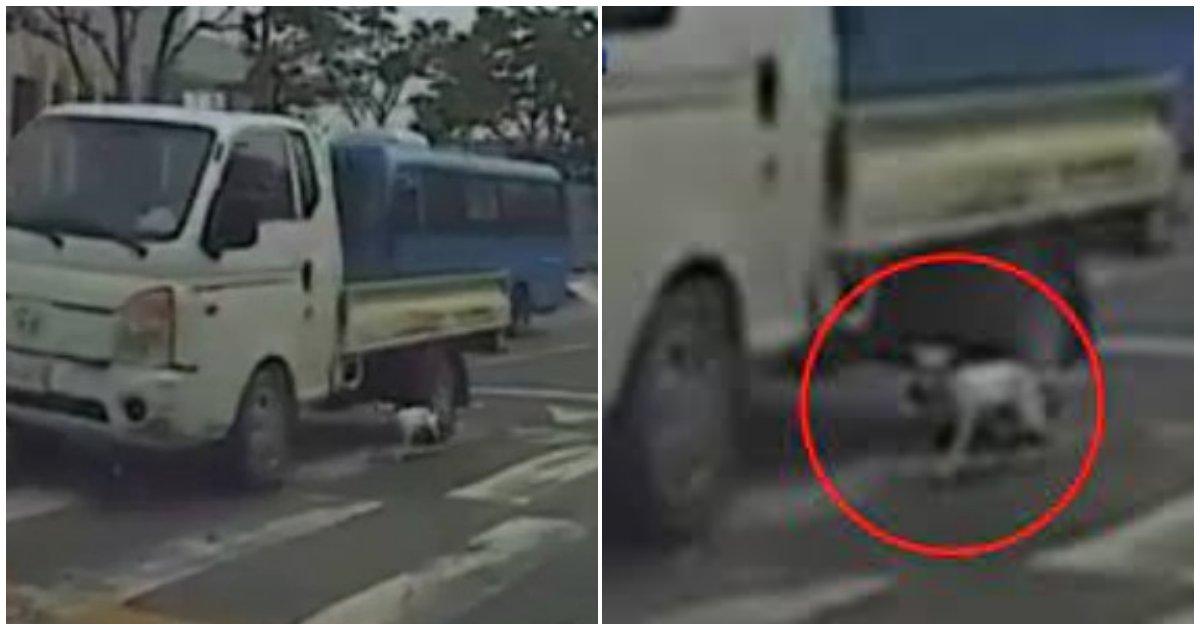 """collage 82.png?resize=412,232 - """"아니 운행중에 ..."""" 강아지 트럭에 매달아 피투성이 만들어놓고 말 같지도 않은 변명하는 남성 (+영상)"""