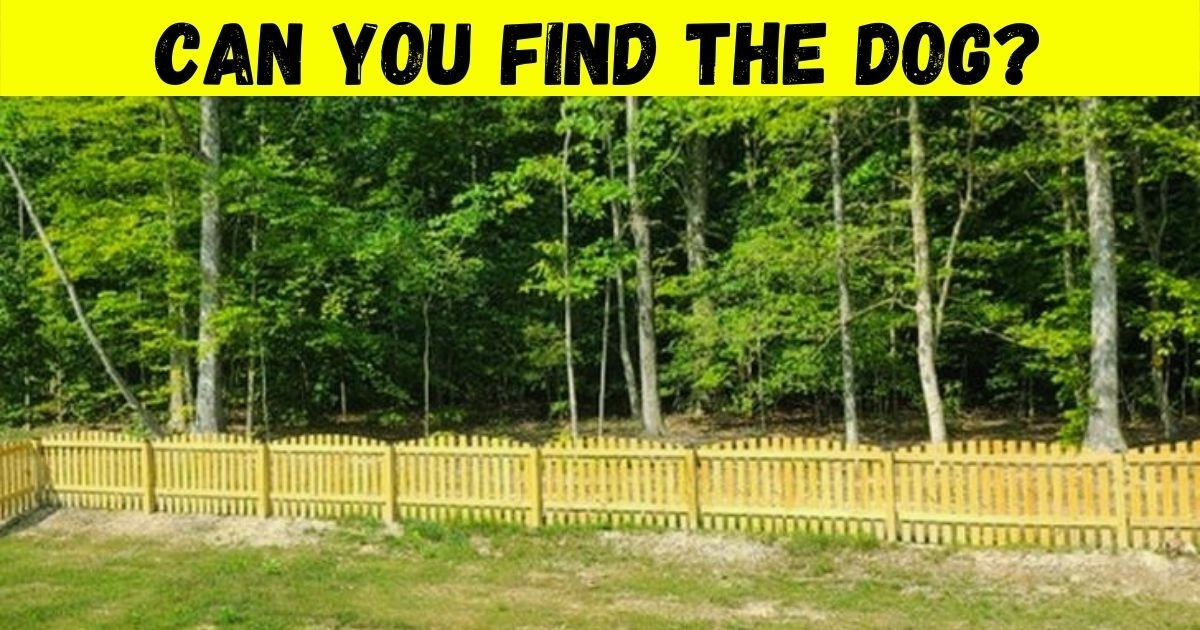 dog5.jpg?resize=1200,630 - 85% Of Viewers Fail To Spot The Dog In This Photo! But Can You Find It In 10 Seconds?