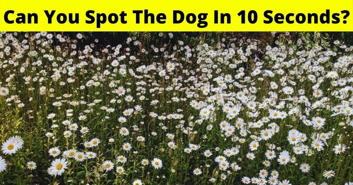 dog6.jpg?resize=1200,630 - Eye Test: Can You Spot The Dog Hiding In This Photo Of Flowers In 10 Seconds?