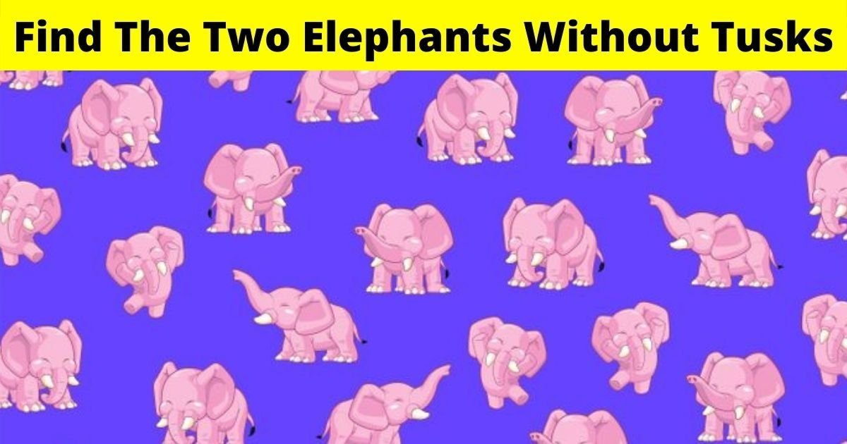 elephants4.jpg?resize=1200,630 - There Are Two Elephants Without Tusks Hiding In This Picture! Can You Spot Them?