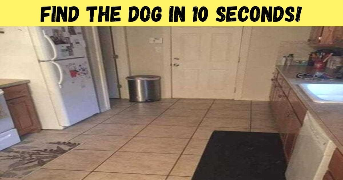 find the dog in 10 seconds.jpg?resize=1200,630 - 95% Of People Can't See The Dog In This Kitchen! But Can You Find The Pooch?