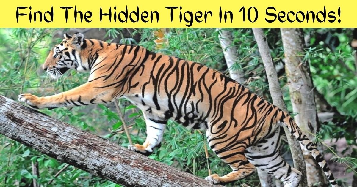 find the hidden tiger in 10 seconds 1.jpg?resize=412,232 - 90% Of Viewers Couldn't Spot The Hidden Tiger In This Photo! But Can You Find It?