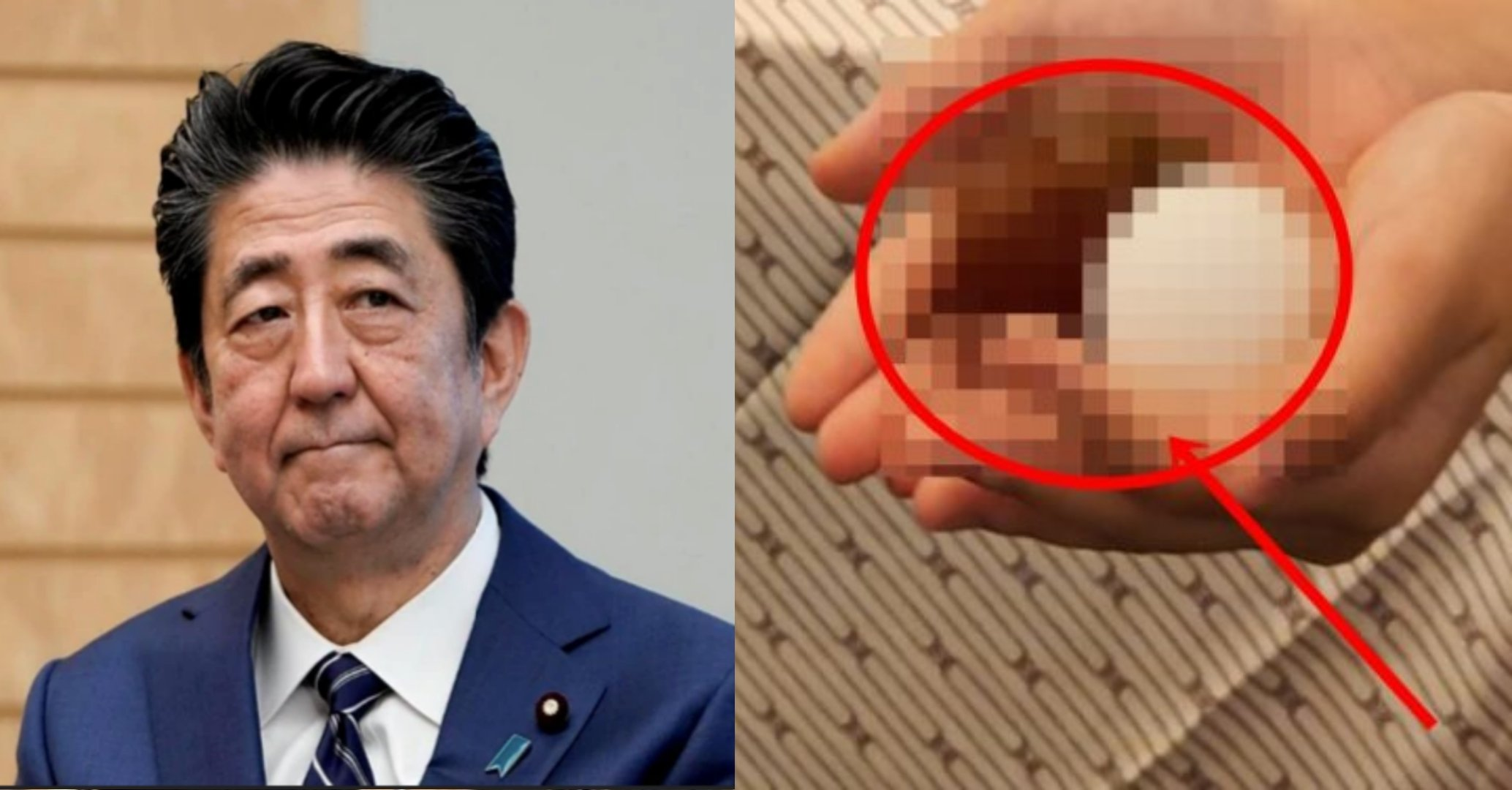 "kakaotalk 20210906 210543108.jpg?resize=1200,630 - ""헐 이거 일본 거였어?"" 일본이 개발했지만 한국이 떼돈 벌고 있는 과일"