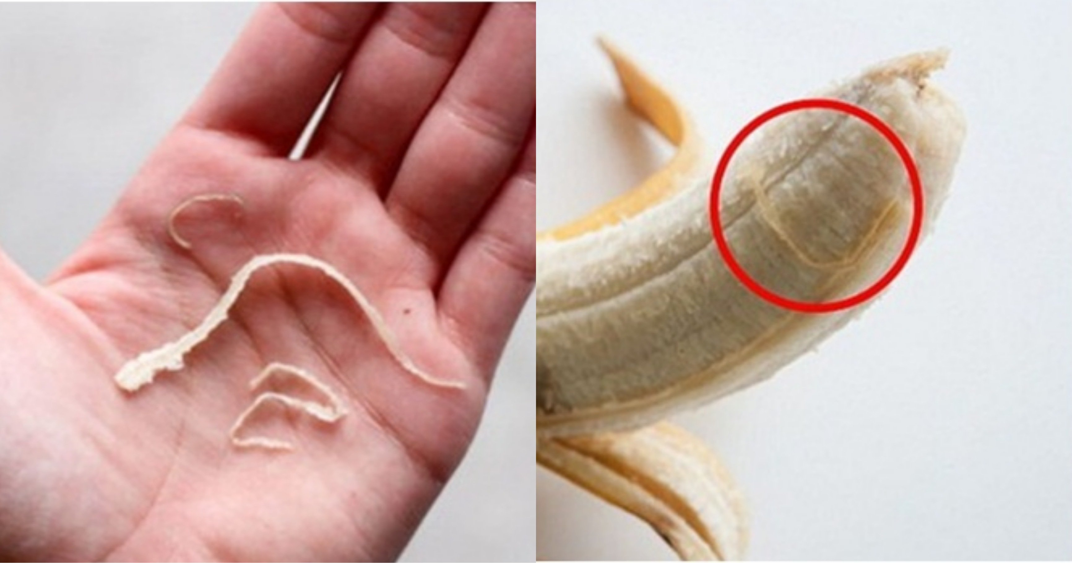 """kakaotalk 20210922 211926285.jpg?resize=412,232 - """"바나나 이거 먹는 사람들?"""" 바나나에 달려 있는 하얀색 가는 줄의 '충격적인' 정체"""